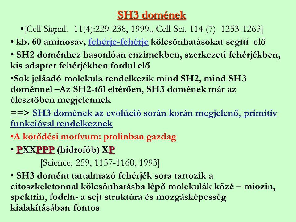 SH3 domének [Cell Signal. 11(4):229-238, 1999., Cell Sci. 114 (7) 1253-1263] kb. 60 aminosav, fehérje-fehérje kölcsönhatásokat segíti elő.